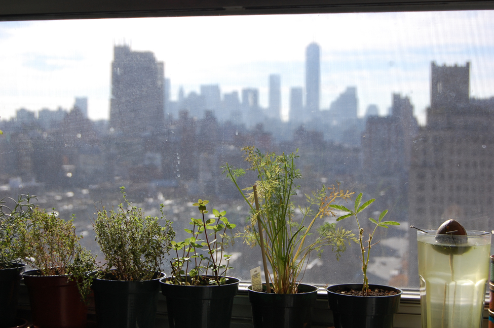 Herbs + Skyline.BWC