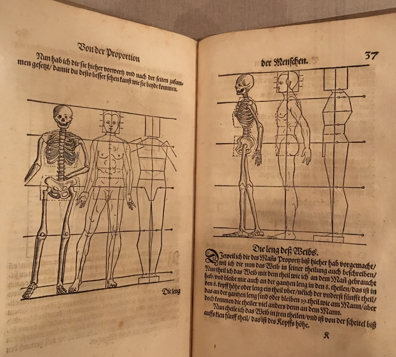 Heinrich Lautensack (1522-1568). Anatomical Study, from Des Circkles und Richtscheyts, aus der Perspectiva und Proportion der Menschen (Of circles and right angles, also on perspective and human proportion), 1564. Woodcut. Metropolitan Museum of Art.